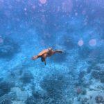 """Premiile Haplea Fructaliu pentru excursia """"10 săptămâni în Oceanul Indian"""""""