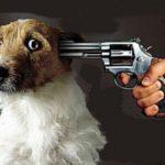 Câini maidanezi și copii vegetarieni