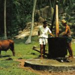 Cum folosesc uleiul de cocos