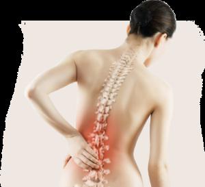 Plants-to-relieve-bone-pain