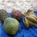 Diversitatea alimentației frugivore