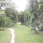 Refugiul Buddhist de la Suan Mokkh, episodul 2