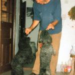 De ce nu adopt un câine… sau niciun alt animal