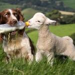 Vegan etic sau omnivor conștient