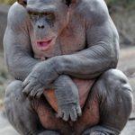 Primata low carb și hidratarea