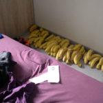 Naufragiat pe insula bananelor