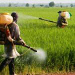 Mai puține pesticide cu mai puțini bani - partea I