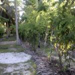 Seychelles - La Digue - Fructe - 2