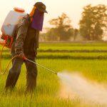 Pesticide artificiale și naturale - ghidul frugivorului